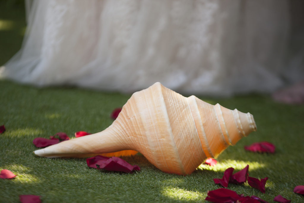 Hawaiian Conch Shell